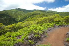 Kapalua Hiking Trail